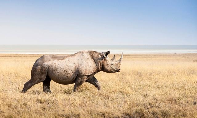 Naturschutz Namibia